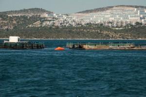 Betonwüsten und Fischfarmen